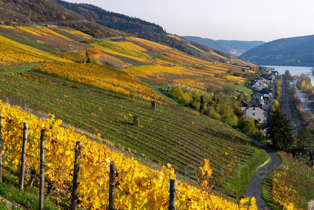 Lorcher Weinhänge